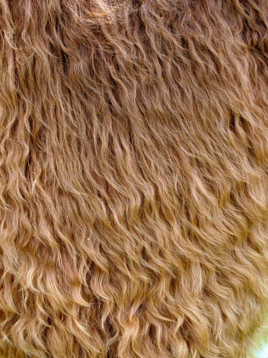 Cataleya fiber 3-07